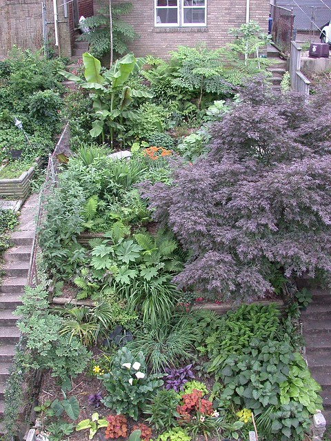 Garden_June_16