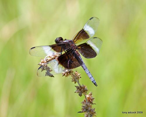 lake insect pond waterlily dragonfly lilypad canonef40056l lakeheron danvilleva danshill