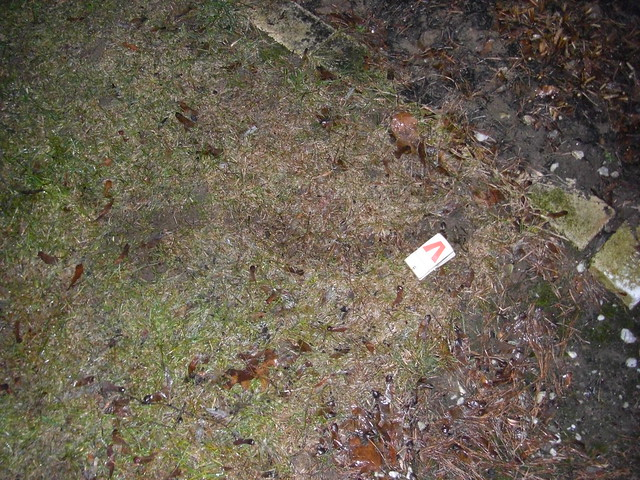 Vole trap 006 flickr photo sharing - Volle trap ...