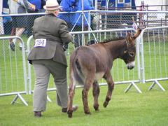 animal sports, animal, pack animal,