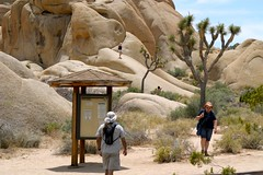 Joshua Tree National Park, 2009 - 087