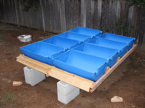 Taylor and carson backyard aquaponics setup for Taylor fish farm
