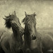 Horses themselves they don't whisper, they just talk ~textured~