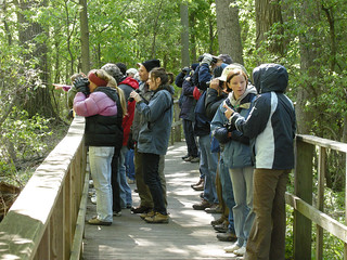 Magee Marsh Crowd