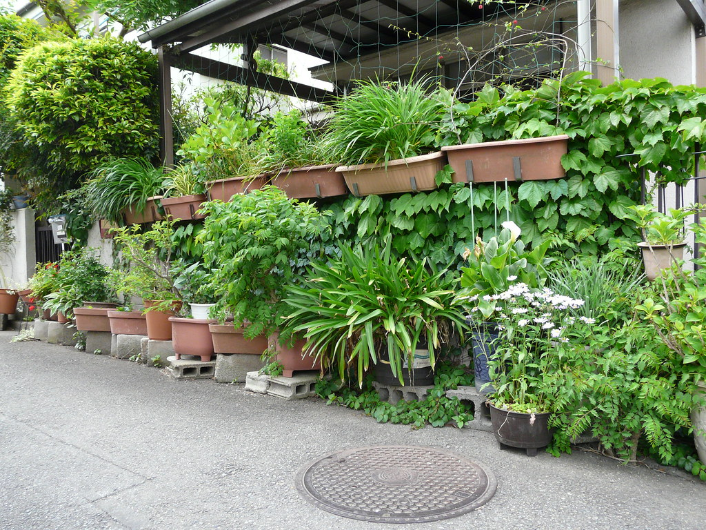 Green wall in pots and planters fixes for Wall plants outdoor