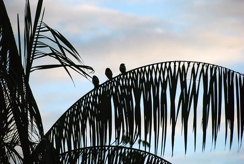 bird ecuador napowildlifecenter yasuninationalpark