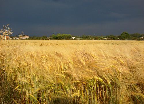 Le jour où la pluie viendra (3)