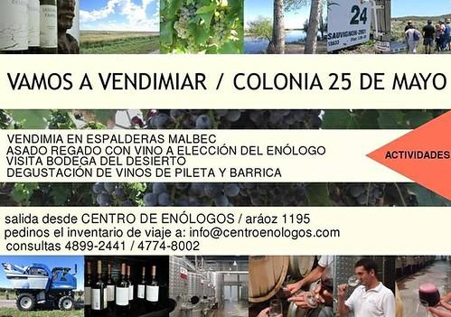 Centro de Enólogos invita a vendimiar a 25 de Mayo