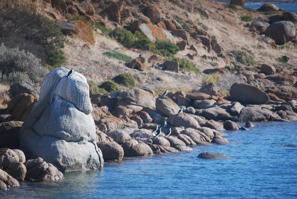 Cormorant - Granite Island