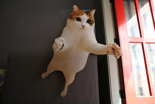 Cat Jump!
