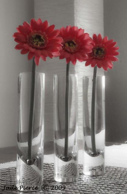 Flowers in test tube vase a photo on flickriver for Test tube vase