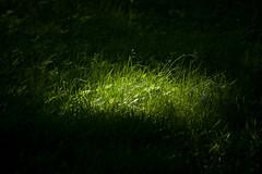 grass spotlight