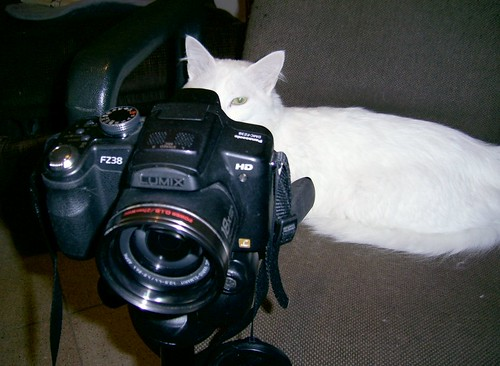 Photographer Cat