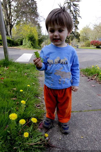 the idea of eating dandelion must've sounded better than it tasted