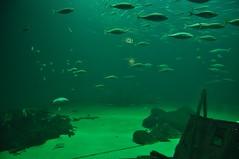 Aquarium im urlaub, Becken
