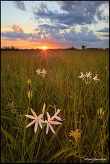 Stars of the Everglades