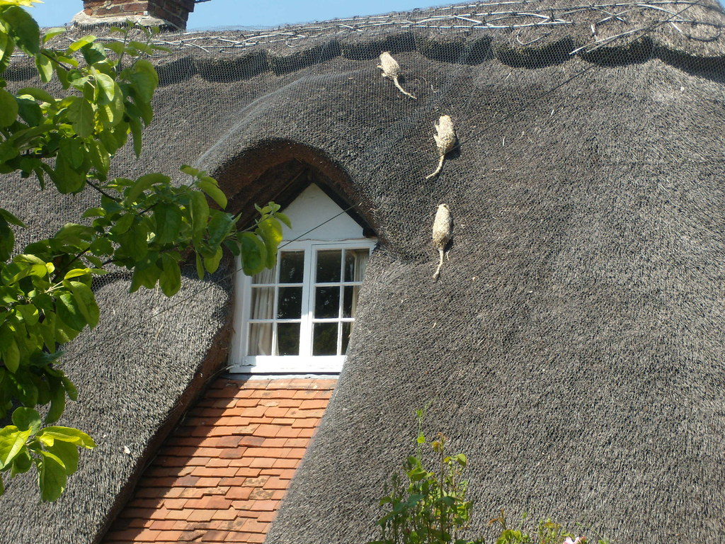 Thatched rats, Blewbury Cholsey to Goring