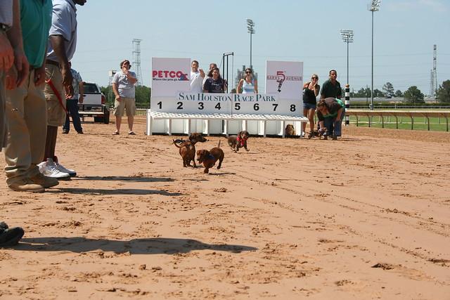 Wiener Dog Races Sam Houston Race Park