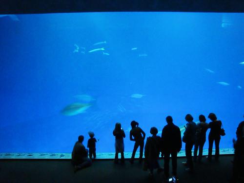 DSC26493, Monterey Bay Aquarium, California, USA
