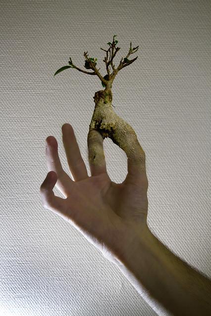 To have a green thumb avoir la main verte flickr photo sharing - Avoir la main verte ...