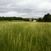 Groveton Landscape