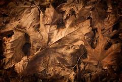 teXture  - Dead Leaves