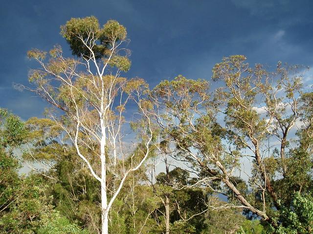 Las Montañas Azules, Nueva Gales del Sur, Australia