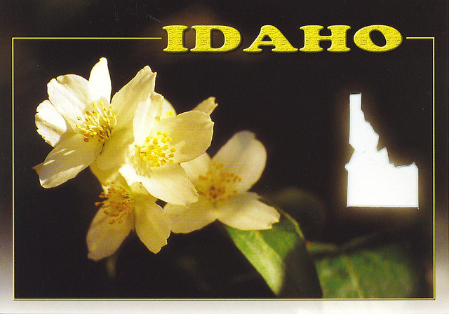 Looking For Alaska Flower: Photo