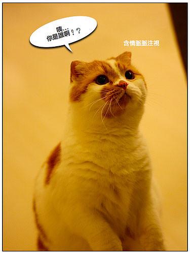 可爱小猫交朋友_05 | flickr – 相片分享!