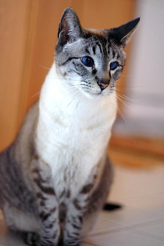 How To Pet A Cat Gunshow