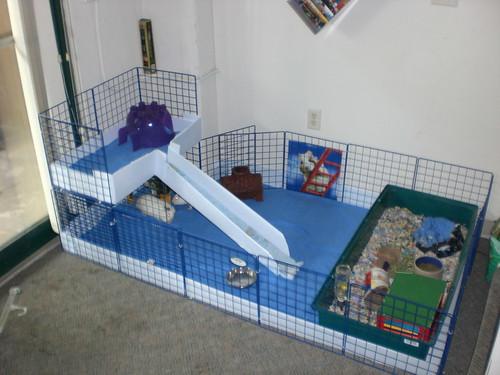New guinea pig cage spacefem 39 s livejournal for How to guinea pig cage
