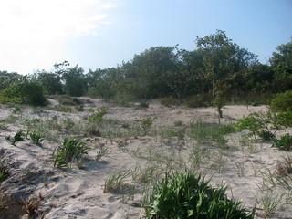 Obrázek Plumb Beach u Kings County. nyc newyorkcity ny newyork beach brooklyn waterfront seashore picnik seacoast sheepsheadbay atlanticcoast raritanbay plumbbeach