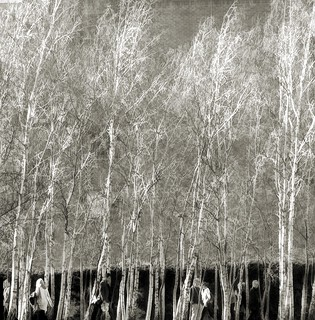 silver birches at Tate Modern