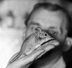 Olifantsspitsmuis in Artis. Oppasser houdt muisje op de hand