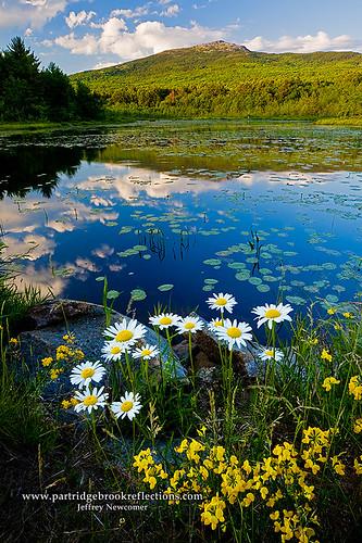 Perkins Pond Spring