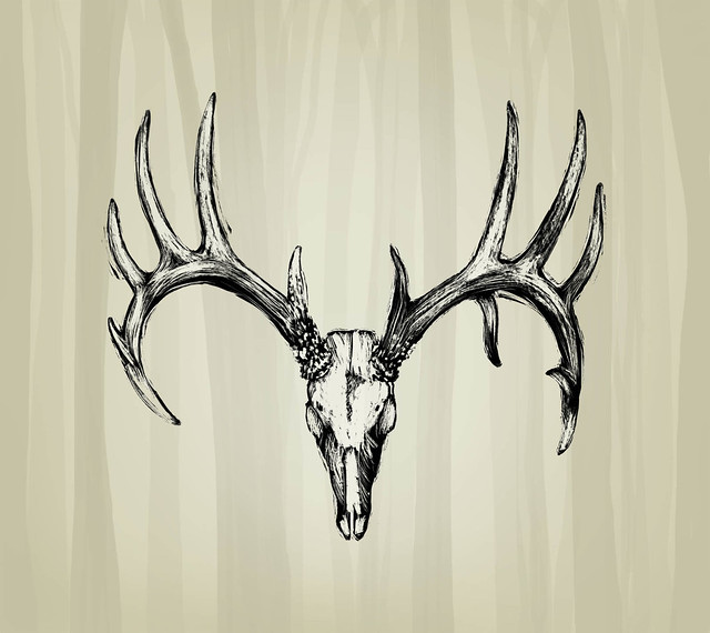Elk skull drawing - photo#23