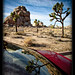 Joshua Tree NP reflection
