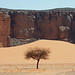 A tree, a cliff and a lot of sand