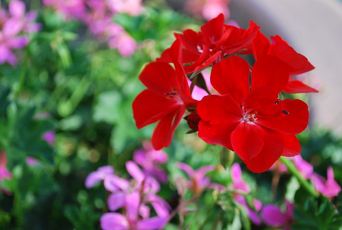 Red Flowers For U