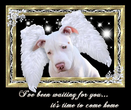 Message to Human Companion: It's time to come home ( to heaven )...  from White Angel Wings Puppy Dog