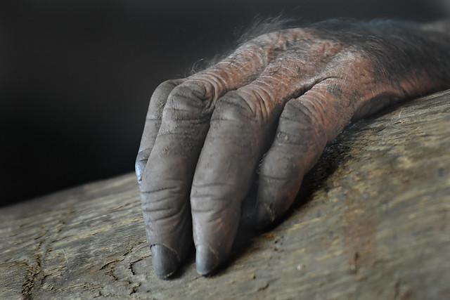 la mano peluda