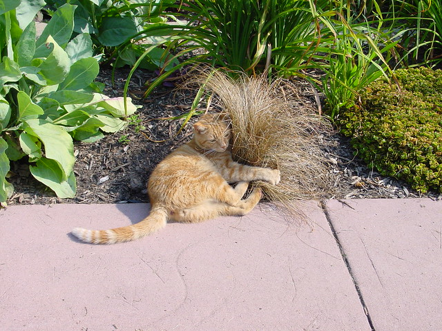 Cat hugging Carex