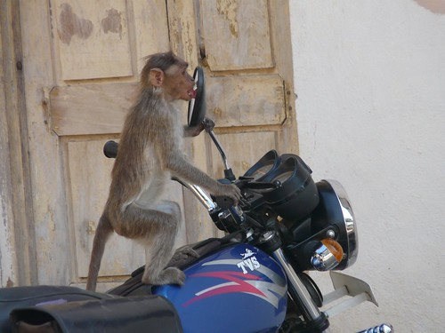Funny animal, Monkey on a bike