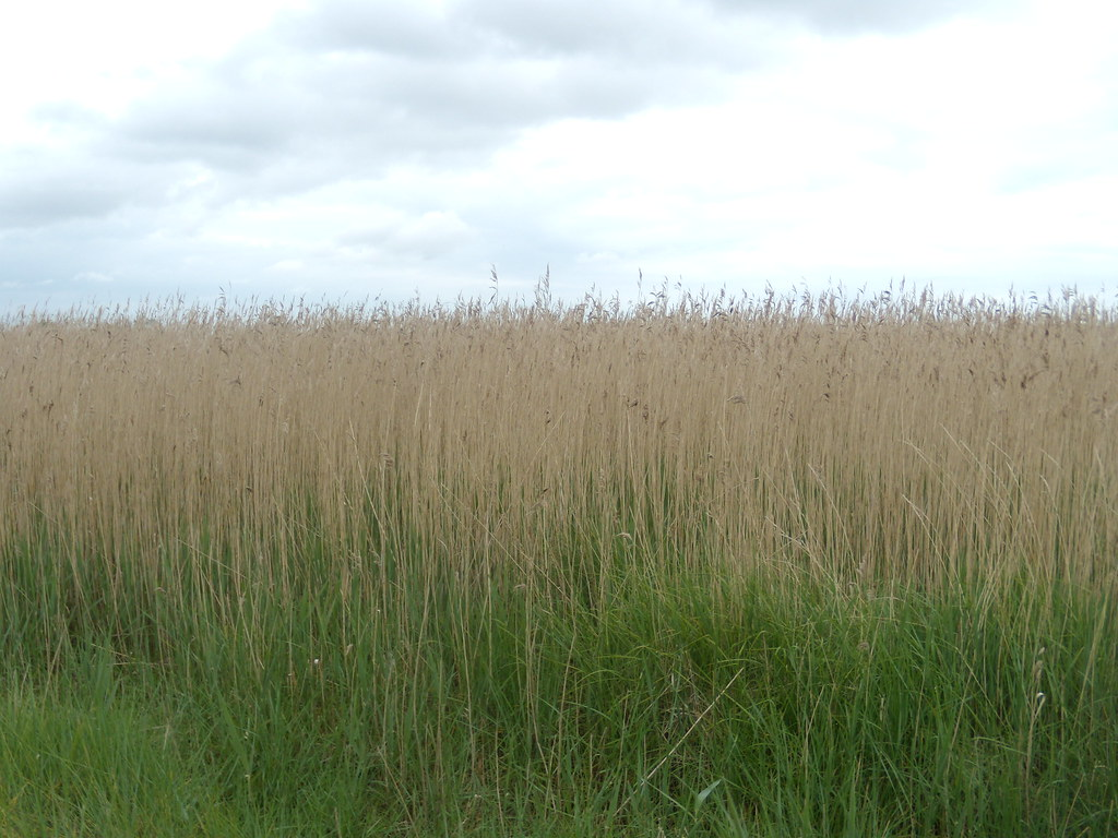 Reeds Southbourne to Chichester
