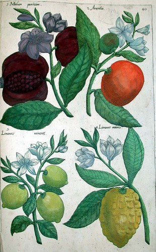 About what is a botanical print the basics herbals whose function was to provide information - Nature curiosity stressed out plants emit animal like signals ...
