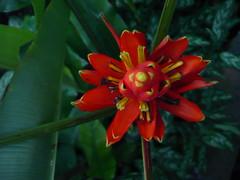 Wildlife flora et fauna