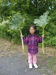 Olivia Harvesting Rhubarb