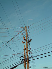 electrical supply, overhead power line, line, transmission tower, electricity, blue, sky,