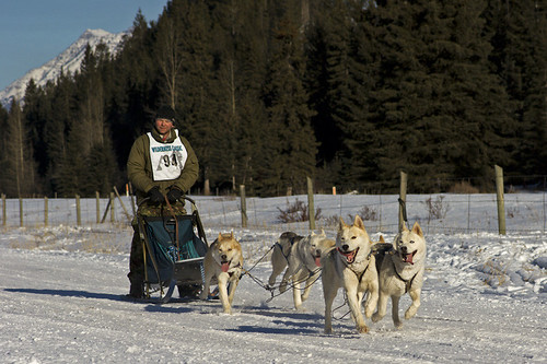 3217383140 d726de7d64 Nice Sled Dog Racing photos