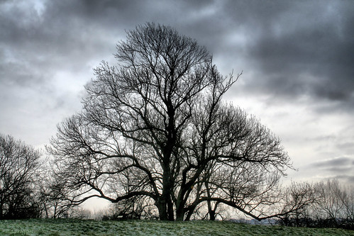 The beauty of a tree in winter